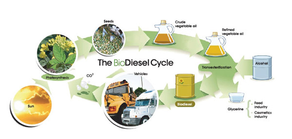 research paper on biodiesel production from algae View biofuels from algae research papers on academiaedu for free  pakistan has an enormous potential of biodiesel production from jatropha, plants seed oil and .